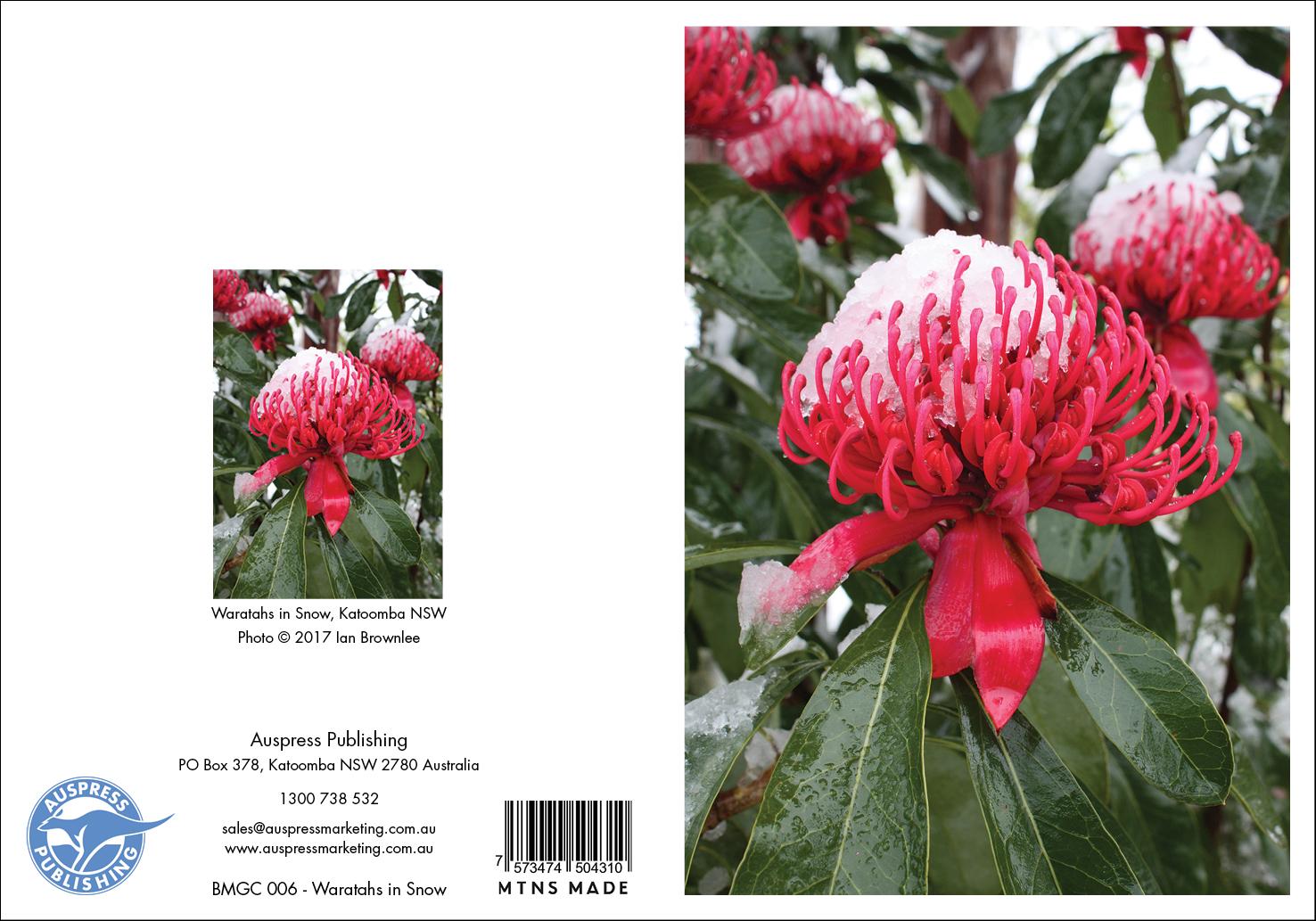 Bmgc006 Waratahs In Snow Greeting Card